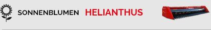 helianthus-de